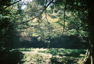 森の中の木の写真・画像素材[2978227]