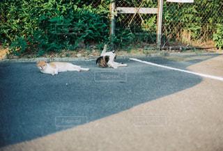 地面に横たわっている犬の写真・画像素材[2978231]