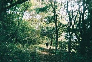 森の中の木の写真・画像素材[3920575]