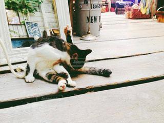 猫の写真・画像素材[260207]