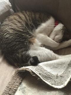 猫の写真・画像素材[260333]