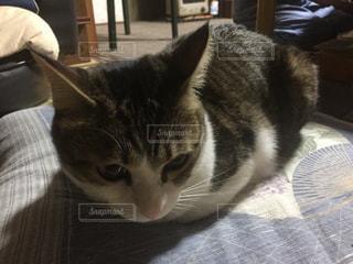 猫の写真・画像素材[264288]