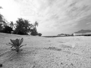 海の写真・画像素材[260402]