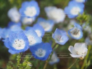 自然の写真・画像素材[260459]