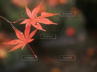 自然の写真・画像素材[260845]