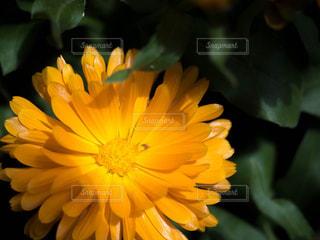 自然の写真・画像素材[464224]