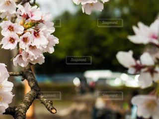 春の写真・画像素材[659823]