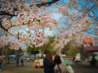 春の写真・画像素材[659825]