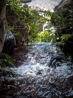 森の中の大きな滝の写真・画像素材[916569]