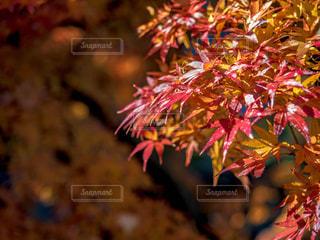 近くの木のアップの写真・画像素材[916577]