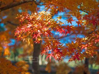 近くの木のアップの写真・画像素材[916579]