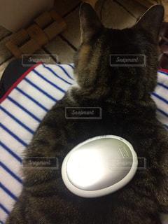 猫の写真・画像素材[313508]