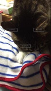 猫の写真・画像素材[327561]