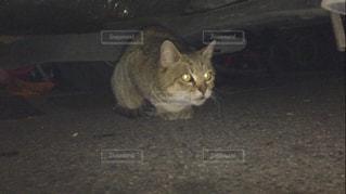 猫の写真・画像素材[361423]