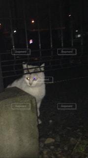 猫の写真・画像素材[363852]