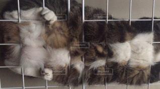猫の写真・画像素材[373760]