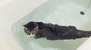 猫の写真・画像素材[416585]