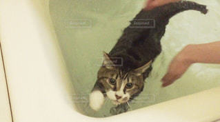 猫 - No.416587