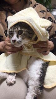 猫の写真・画像素材[416592]