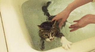 猫の写真・画像素材[416594]
