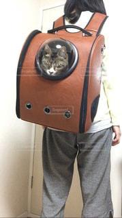 猫の写真・画像素材[417149]