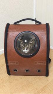 猫の写真・画像素材[417176]