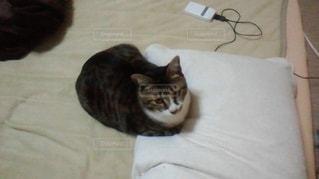 猫の写真・画像素材[610083]