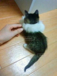 猫の写真・画像素材[610086]