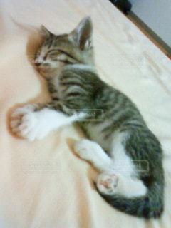 猫の写真・画像素材[610088]