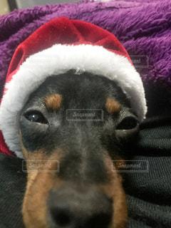 サンタ犬 - No.260875