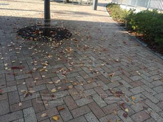 秋の写真・画像素材[261295]