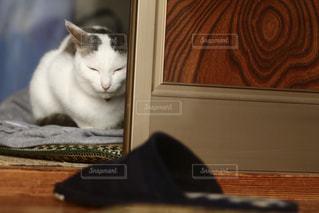 猫 - No.261329