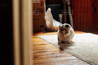 猫の写真・画像素材[261334]
