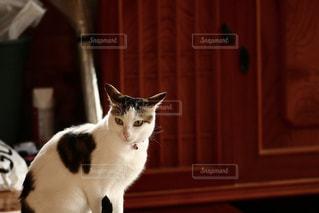 No.261551 猫