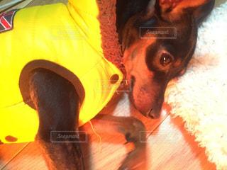 犬の写真・画像素材[261884]