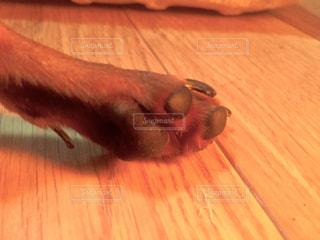 犬の写真・画像素材[261887]