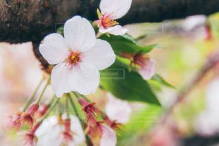 花の写真・画像素材[262028]