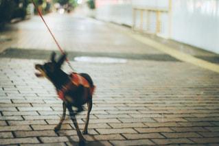 犬の写真・画像素材[262054]