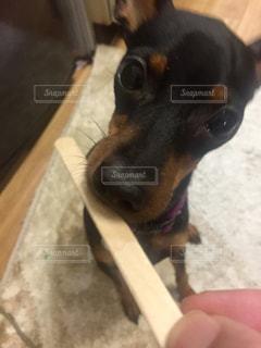 犬の写真・画像素材[263105]