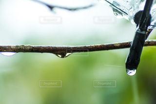 雨 - No.458476