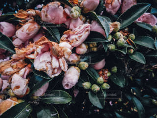 自然の写真・画像素材[464024]