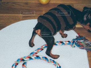 No.471193 犬