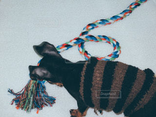 犬の写真・画像素材[471194]