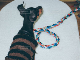 犬 - No.471196