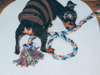 No.471199 犬
