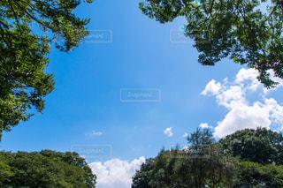 自然の写真・画像素材[495135]