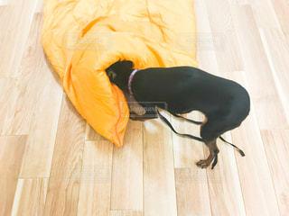 犬 - No.495555