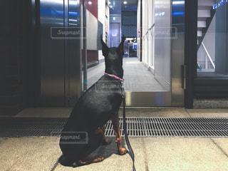 No.495573 犬