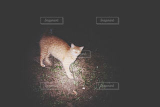 夜の写真・画像素材[636287]