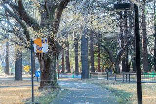 道の端にサインの写真・画像素材[749790]